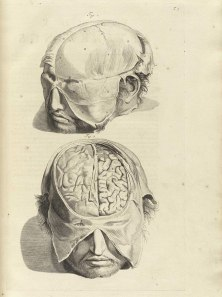 public-domain-medical-brain-p